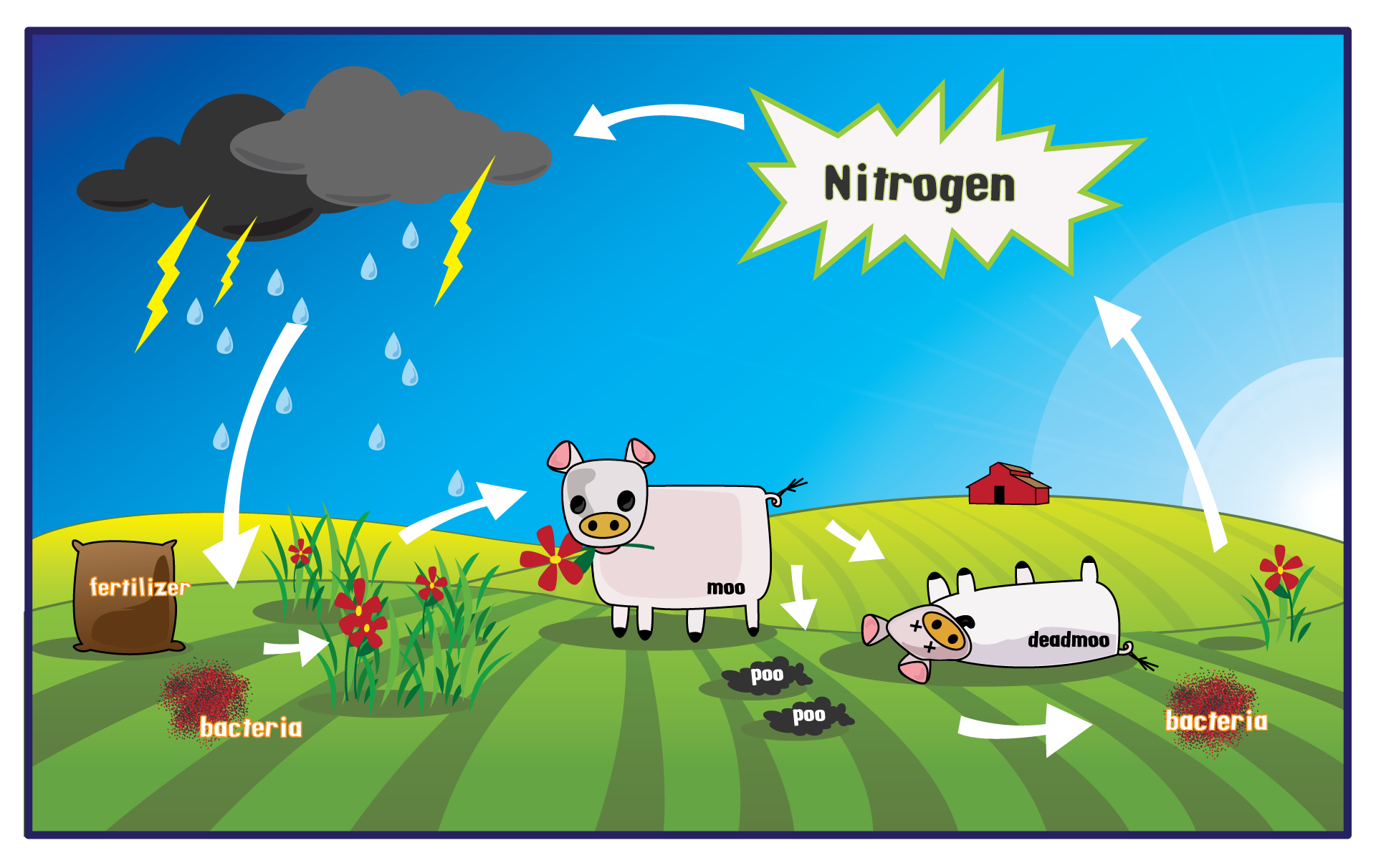 Index of wp contentuploads201404 nitrogen cycle 8g pooptronica Images