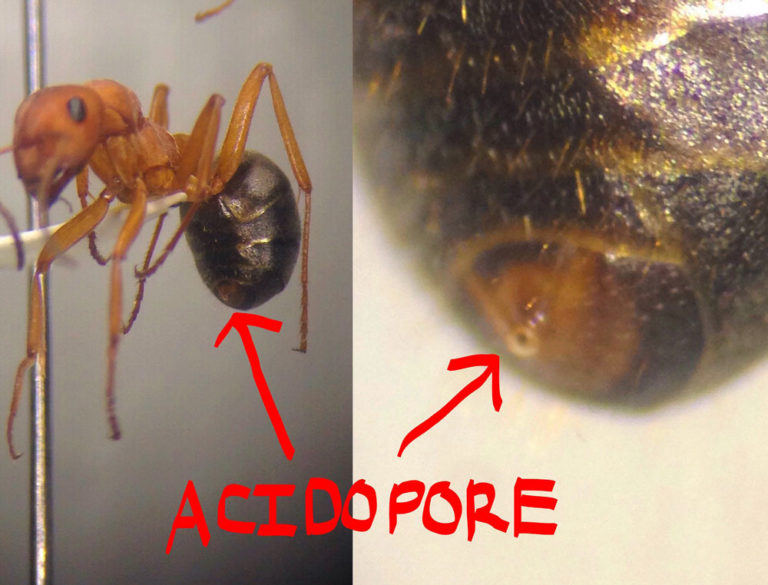 Ants12