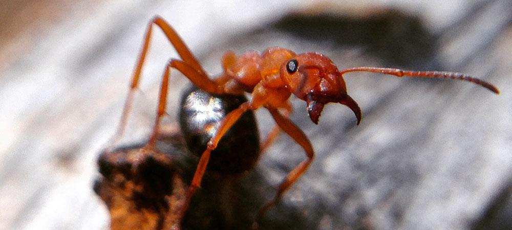 Ants5