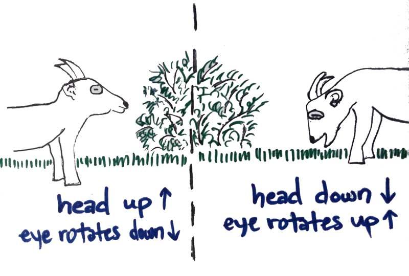Pupils-9