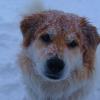 Ok, he's not a puppy anymore, but he's still cute.