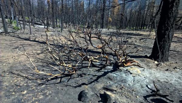 Lake Fire Damage