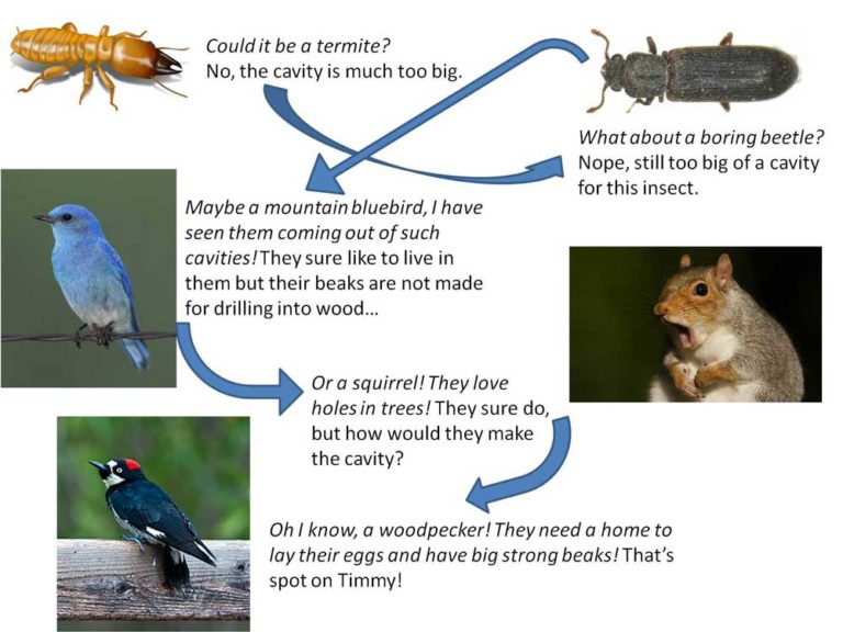 Outdoor Education Question Guide
