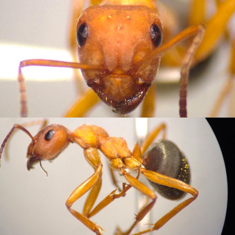 Ants7